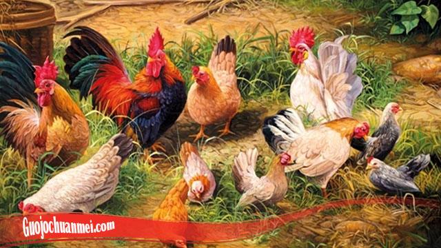 Kenali Dan Ketahui Sifat Dari Ayam Ternak