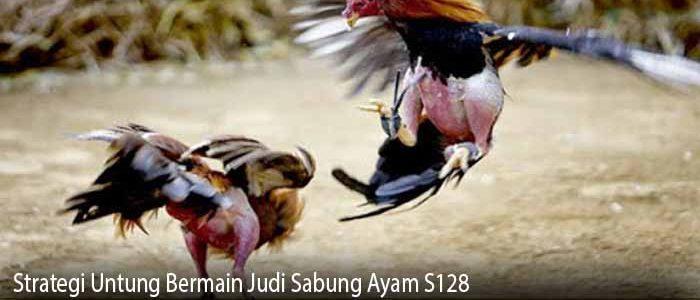 Strategi Untung Bermain Judi Sabung Ayam S128